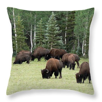 Bison At North Rim Throw Pillow by Laurel Powell
