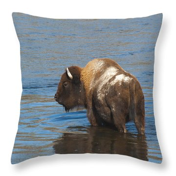 Bison Crossing River Throw Pillow