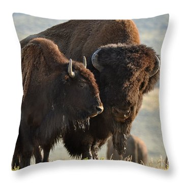 Bison Friends Throw Pillow
