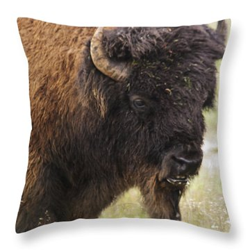 Bison From Yellowstone Throw Pillow by Belinda Greb