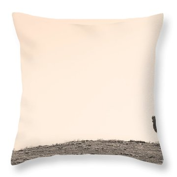 Bison Hill  Throw Pillow by James BO  Insogna