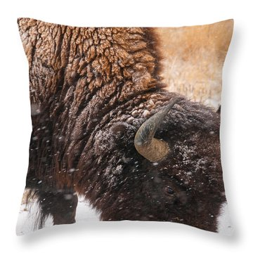 Bison In Snow_1 Throw Pillow