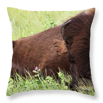 Bison Nap Throw Pillow by Alyce Taylor