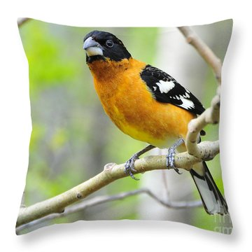 Blach-headed Grosbeak Throw Pillow