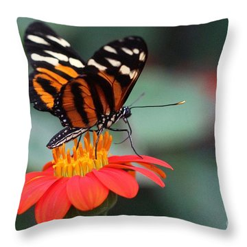 Black And Brown Butterfly On A Red Flower Throw Pillow