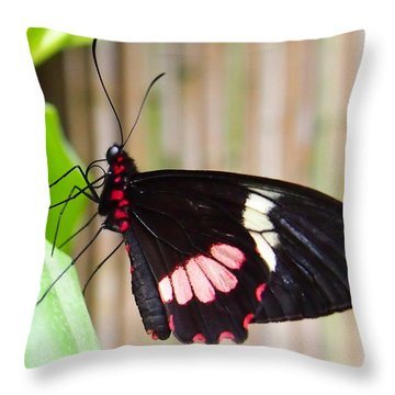 Throw Pillow featuring the photograph Black And Red Cattleheart Butterfly by Amy McDaniel