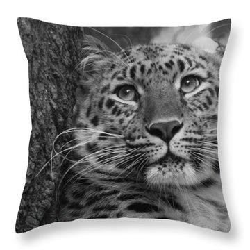 Black And White Amur Leopard Throw Pillow