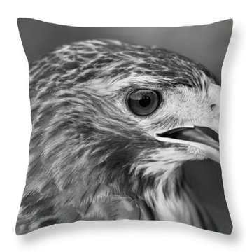 Black And White Hawk Portrait Throw Pillow by Dan Sproul