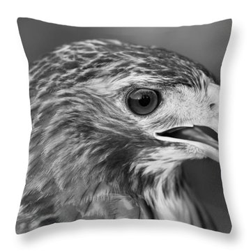Black And White Hawk Portrait Throw Pillow