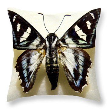 Throw Pillow featuring the photograph Black And White Moth by Rosalie Scanlon