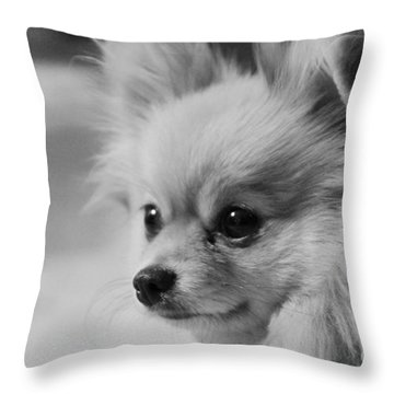 Black And White Portrait Of Pixie The Pomeranian Throw Pillow