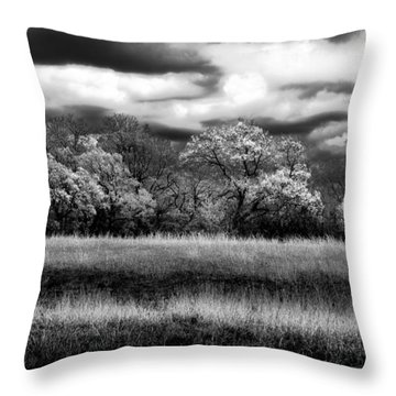 Black And White Trees Throw Pillow by Darryl Dalton