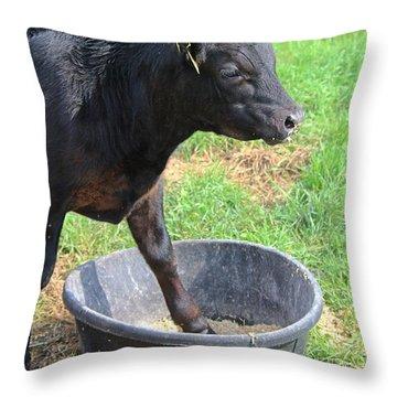 Black Angus Calf Throw Pillow