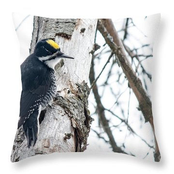 Black-backed Woodpecker Throw Pillow by Cheryl Baxter