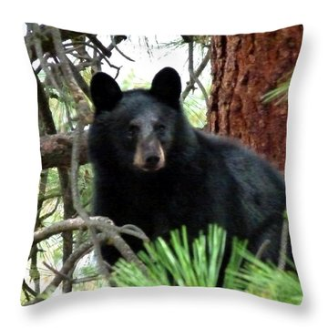 Black Bear 1 Throw Pillow by Will Borden