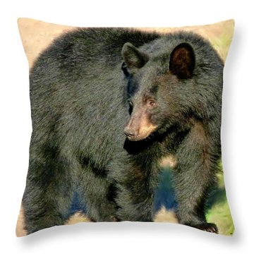 Black Bear 3 Throw Pillow by Will Borden