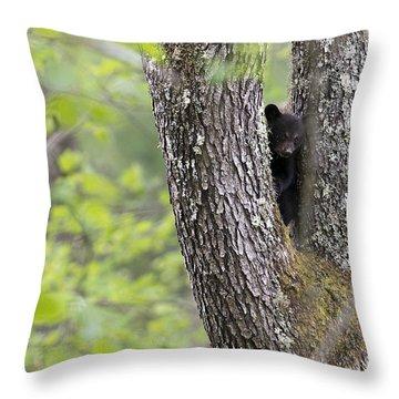 Black Bear Cub In Fork Of Tree Throw Pillow by Dan Friend