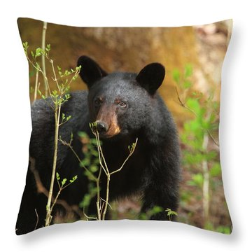 Throw Pillow featuring the photograph Black Bear by Geraldine DeBoer