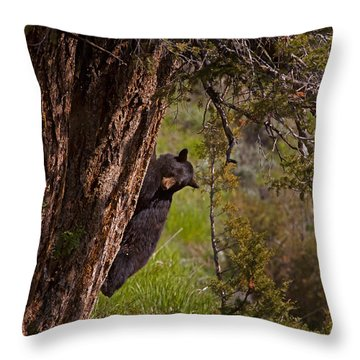 Throw Pillow featuring the photograph Black Bear In A Tree by J L Woody Wooden
