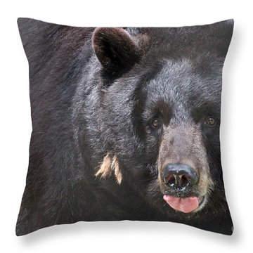 Black Bear Throw Pillow by Meg Rousher