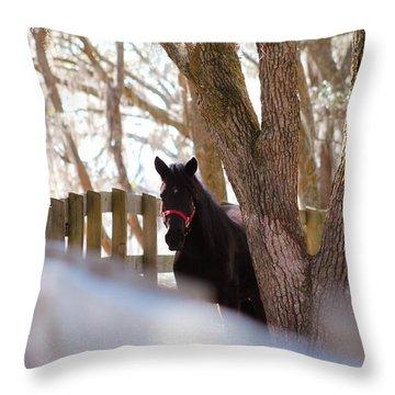 Black Beauty Throw Pillow