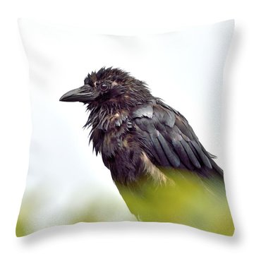 Black Beauty Throw Pillow by Kathy King