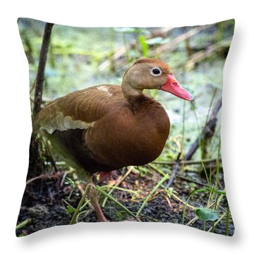 Throw Pillow featuring the photograph Black-bellied Whistling Duck 2 by Gregory Daley  PPSA