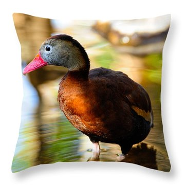 Black Bellied Whistling Duck Throw Pillow