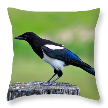 Black Billed Magpie Throw Pillow