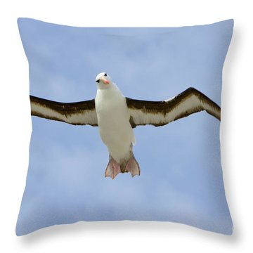 Black-browed Albatross Flying Throw Pillow by Yva Momatiuk John Eastcott