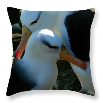 Throw Pillow featuring the photograph Black Browed Albatross Pair by Amanda Stadther