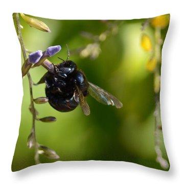 Black Bumblebee Throw Pillow by Debra Martz