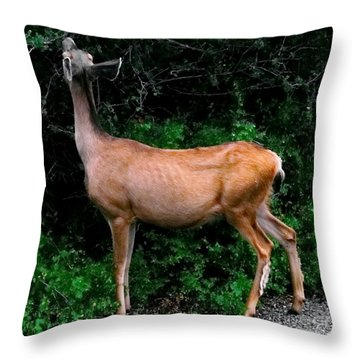 Black Canyon Deer Throw Pillow by Tim Richards