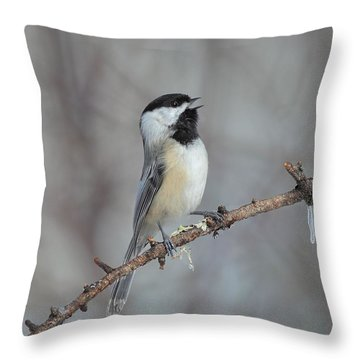 Black Capped Chickadee Calling Throw Pillow by Daniel Behm