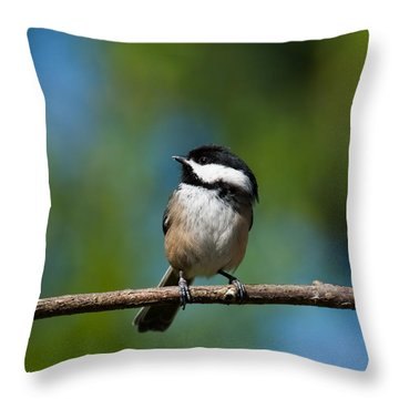 Black Capped Chickadee Perched On A Branch Throw Pillow by Jeff Goulden