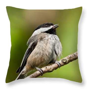Black Capped Chickadee Singing Throw Pillow