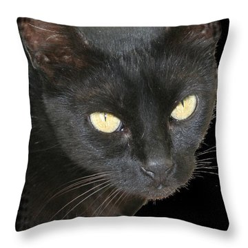 Black Cat Isolated On Black Background Throw Pillow by Tracey Harrington-Simpson