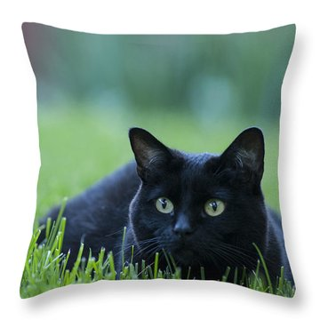 Black Cat Throw Pillow by Juli Scalzi