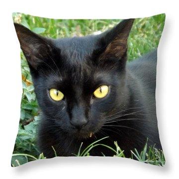 Black Cat Throw Pillow by Lingfai Leung