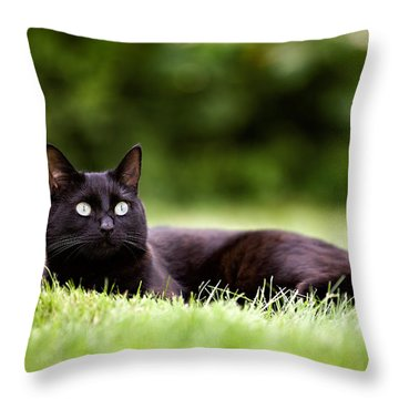 Black Cat Lying In Garden Throw Pillow