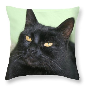 Black Cat Throw Pillow by Tracey Harrington-Simpson