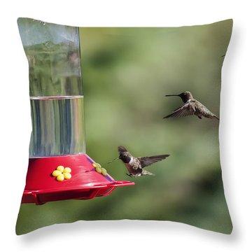 Black-chinned Hummingbird Action Panorama Throw Pillow