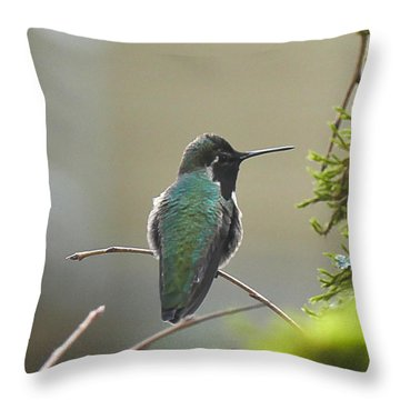 Black Chinned Hummingbird Throw Pillow by Ron Roberts