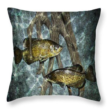 Black Crappies A Fish Image No 0143 Blue Version Throw Pillow