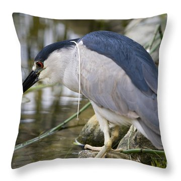Black-crown Heron Going Fishing Throw Pillow by David Millenheft