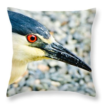 Black Crowned Night Heron 2 Throw Pillow by Bob and Nadine Johnston