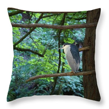 Throw Pillow featuring the photograph Black-crowned Night Heron by Ben Upham III