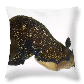 Black Dendrodoris Nudibranch Throw Pillow