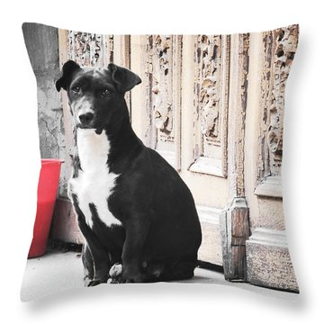 Black Dog Guarding A Vintage Wooden Door Throw Pillow