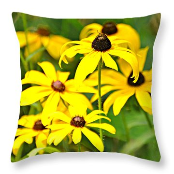 Black Eyed Susan 1 Throw Pillow by Marty Koch